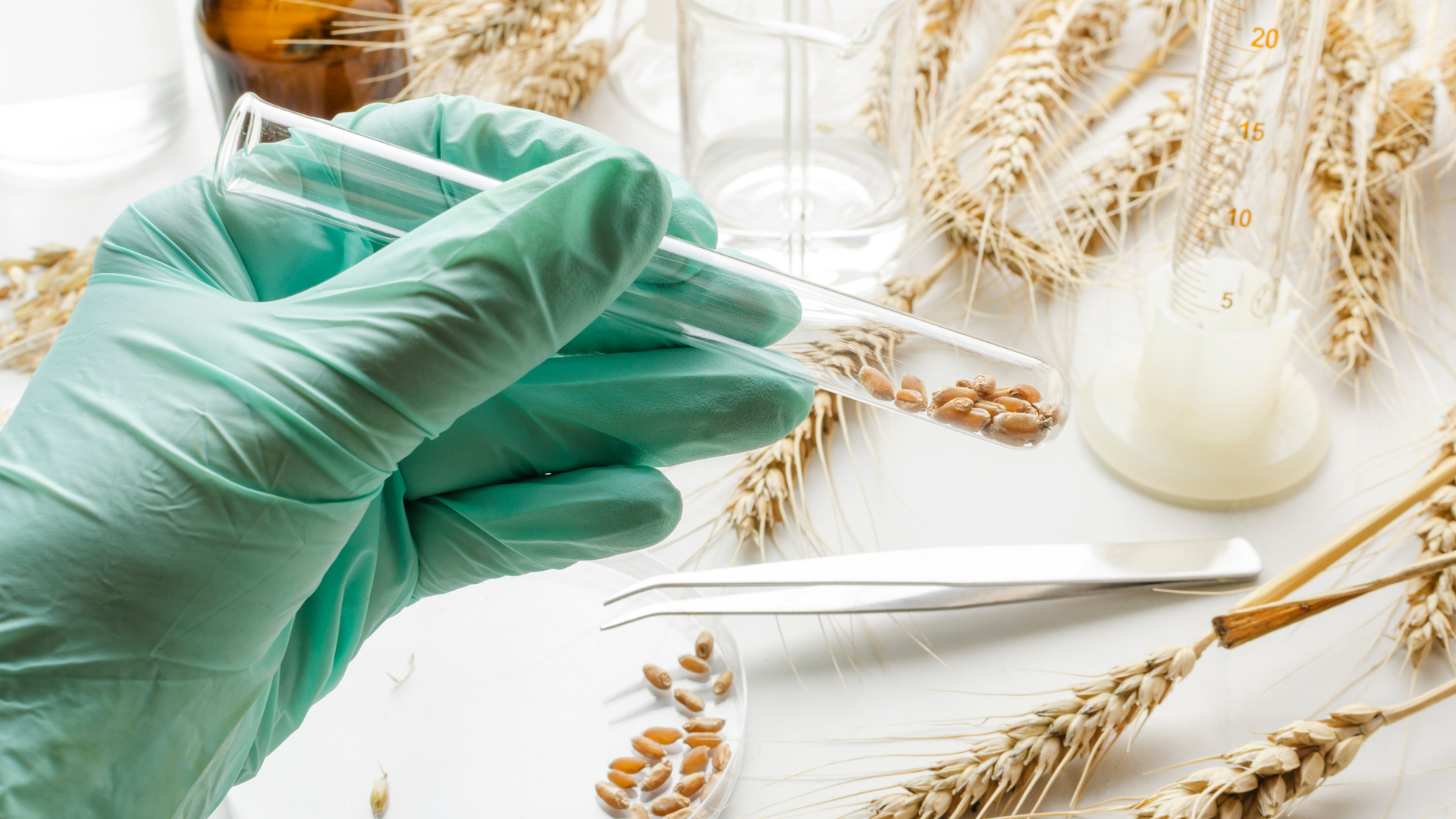 Are You Allergic to Wheat?